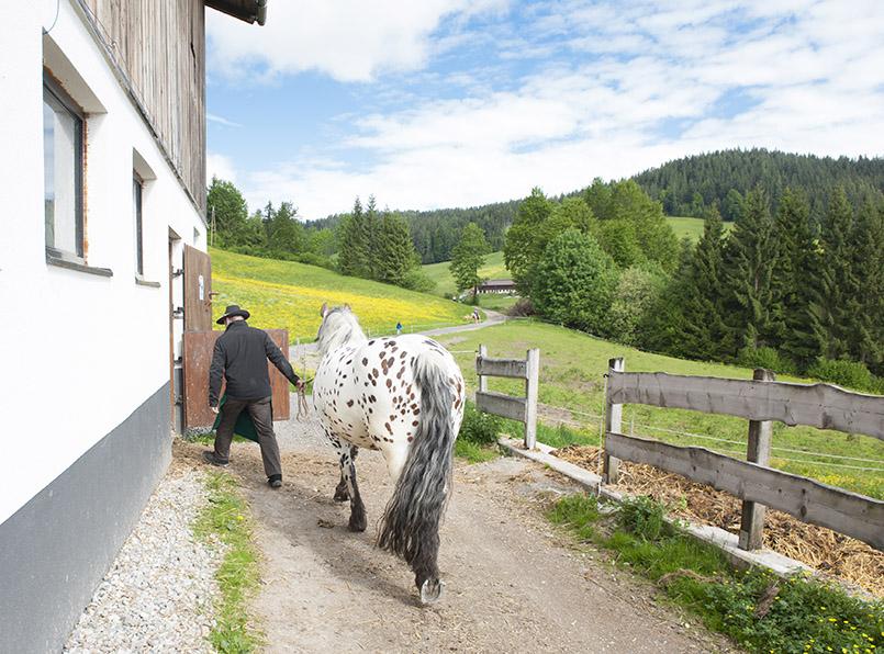 Bauer bringt Pferd in den Stall in Hopfgarten in Tirol