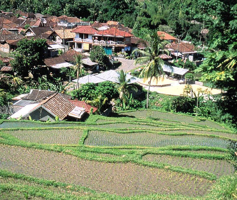 Reisfelder umgeben Banjar im Norden von Bali