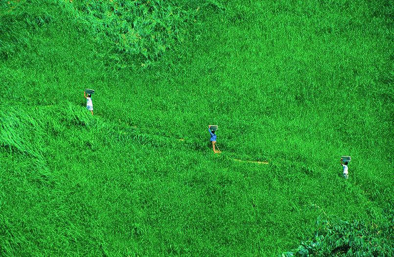 Reisanbau auf Terrassen ist Schwerstarbeit