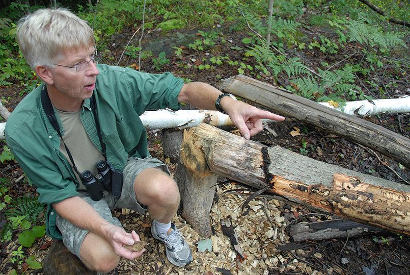 Guide Muskoka Robin Tapley erklärt die besondere Natur von Muskoka