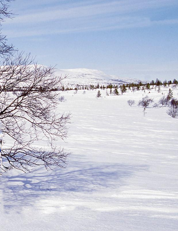 Levi: unberührte Winterlandschaft.