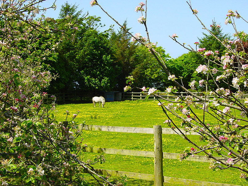 La Mare Winery: Pferd auf einer Koppel im Orchard, dem Apfelgarten des Weinguts, das auch Cider und Apple Brandy produziert.