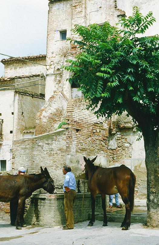 Maulesel an der Tränke in Aliano in der Basilikata
