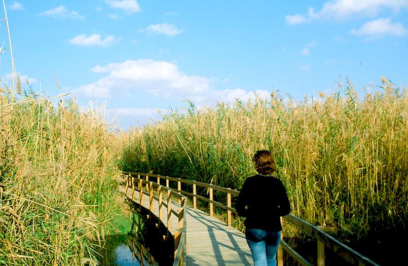 Das Azraq Wetland Reserve von Jordanien
