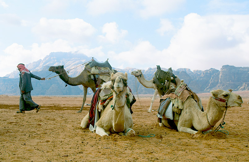 Wadi Rum: Beduinen bieten Kamelritte an.