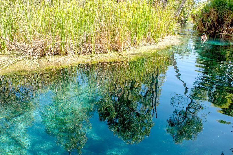 Thermal-Baden im Busch - das gibt es in Bitter Springs im Northern Territory