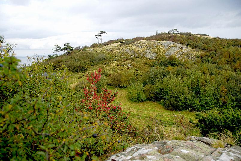 Herbst am Kullen (Kullaberg)