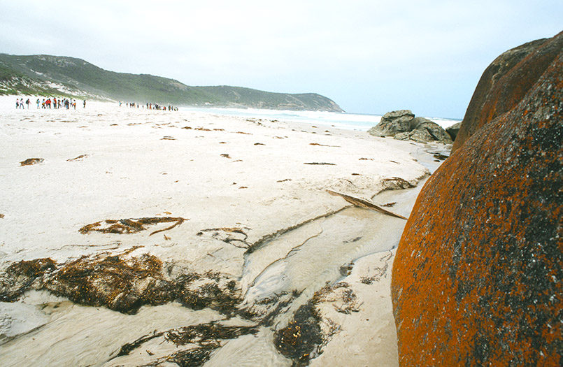 Wilsons Promontory National Park/bei Tidal River: Norman Bay