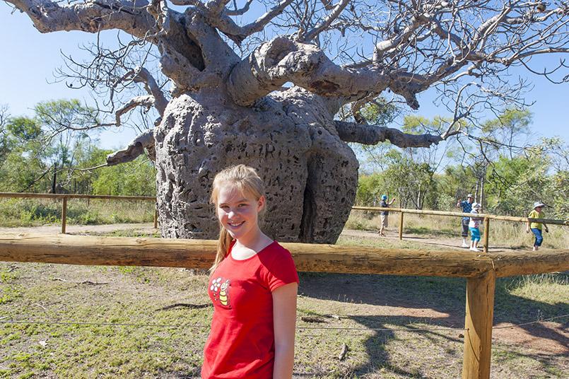 Der Prison Tree von Derby - ein ausgehöhlter Flaschenbaum