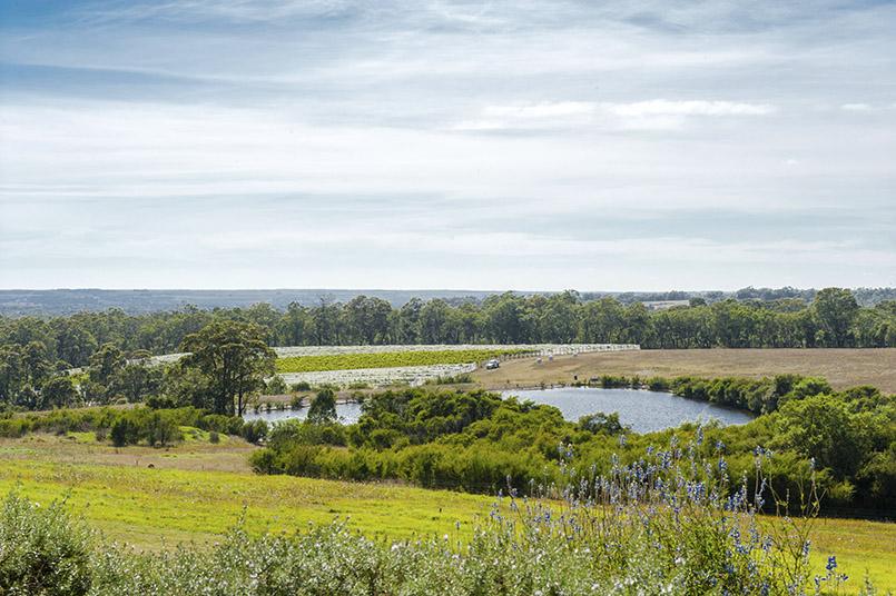 Porongurup: das Weingut Ironwood