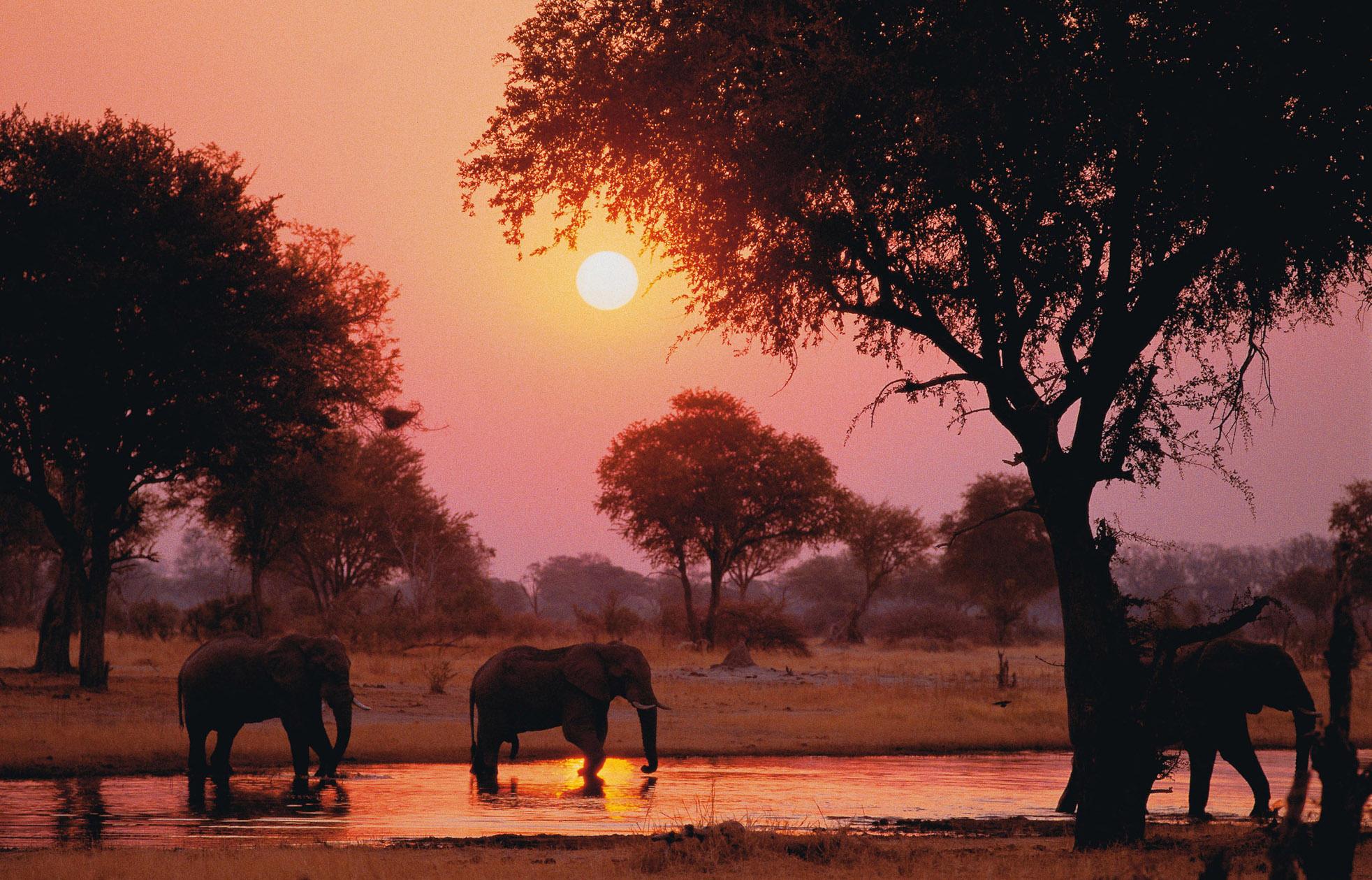 SA: Elefanten.